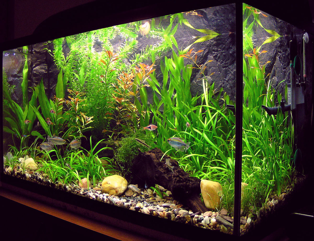 Comment recharger le filtre d'une pompe aquarium ?